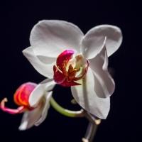 Orchidea gondozás